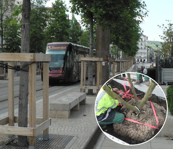 Plantations d'arbres le long de la ligne du Tramway de Clermont-Ferrand